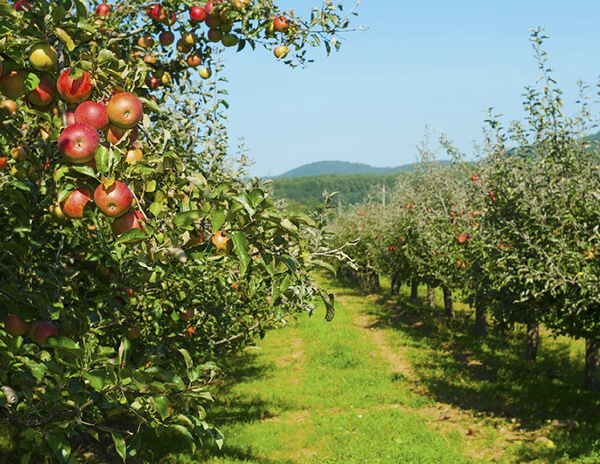 Friendly Orchard